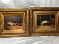 Pair of Victorian 19th Century Oil Paintings Terrier Dogs Ratting Signed J Langlois (5 of 35)