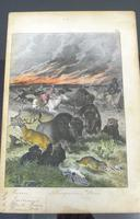 6 Framed Animal Coloured Pictures Plates C1877 Sketches from Nature - N America & Canada (5 of 12)
