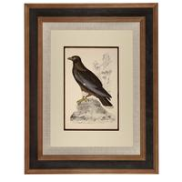Hand Coloured 'Booted Eagle' Lithograph. Goldsmith 1875 (4 of 4)