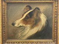 Pair of Scottish 19th Century Oil Paintings Rough Collie Dog Portraits After George Washington Brownlow (10 of 49)