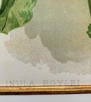 Pure Sunshine 'Inula Roylei' Chromolithograph 1903 (2 of 4)