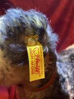 Steiff Classic 1935 Fellow Terrier with Original Tag, Button in Ear & Carrier Bag (6 of 11)