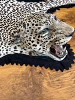 Antique Leopard Skin Rug Taxidermy by Peter Spicer (6 of 18)