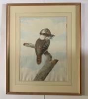 Neville Henry Cayley - Pair of Watercolours of Kookaburras (2 of 7)