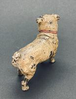 Good Antique Austrian Cold Painted Bronze Standing Pug, Circa 1890, Marks to Base (4 of 8)