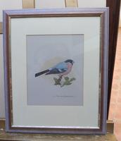 Watercolour Study of a Finch Listed Wildlife Artist David Andrews (3 of 10)