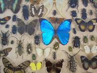 Good Antique Butterfly & Insect Specimens Collection (4 of 7)