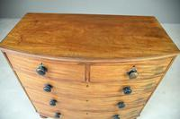 Antique Mahogany Bow Front Chest of Drawers (9 of 9)