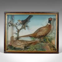 Antique Taxidermy Scene, Birds, Pheasant, Blackbird, Display Case, Victorian (5 of 10)