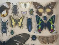 Antique Insect and Butterfly Specimens Collection (2 of 7)