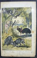6 Framed Animal Coloured Pictures Plates C1877 Sketches from Nature - India (7 of 14)