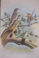 Set of Three Early 20th Century Silk Bird Paintings (7 of 10)