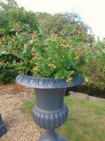 Fine Pair of Cast Iron Campana Garden Urns c.1900 (6 of 8)