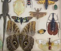 Fabulous Antique Collection Cased Insect & Butterfly Specimens (4 of 7)