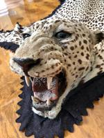 Antique Leopard Skin Rug Taxidermy by Peter Spicer (5 of 18)