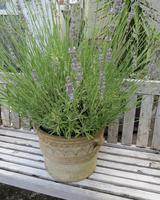 Terracotta Decorative Planter Mid 20th C (10 of 10)