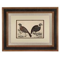 Hand Coloured 'Ground Bird One' Lithograph. Goldsmith 1875 (4 of 4)