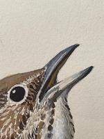 """Watercolour """"Chirping Song Thrush Bird"""" Signed Charles Frederick Tunnicliffe OBE RA 1901-1979 (19 of 35)"""