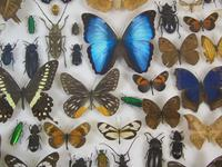 Good Antique Butterfly & Insect Specimens Collection (2 of 8)