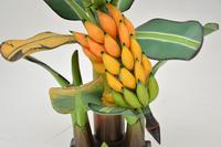 Vintage South Amercian Carved Wood Banana Tree Sculpture (8 of 10)