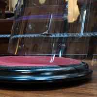 Antique Taxidermy Display Dome, Glass, Showcase, Davis & Co, Bristol, Victorian (8 of 9)