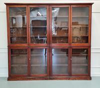 Large Antique Museum Cabinet c.1900 (2 of 7)