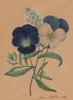 Two Flower Studies (3 of 6)