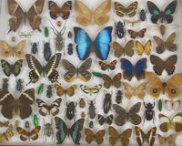 Good Antique Butterfly & Insect Specimens Collection (8 of 8)