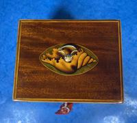 18th Century Mahogany  Shell Inlaid Tea Caddy (11 of 18)