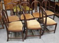 1900's Mahogany Set 8 Hoop Dining chairs with Pop out Seats in Gold (2 of 3)