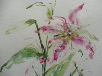 Watercolour Study of a Flower Artist Penelope Shewing (Free Shipping To Mainland England) (9 of 10)
