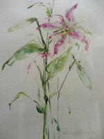 Watercolour Study of a Flower Artist Penelope Shewing (Free Shipping To Mainland England) (10 of 10)
