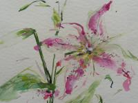 Watercolour Study of a Flower Artist Penelope Shewing (Free Shipping To Mainland England) (6 of 10)