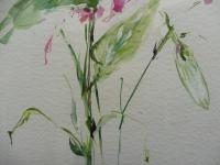 Watercolour Study of a Flower Artist Penelope Shewing (Free Shipping To Mainland England) (8 of 10)