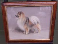 Framed Signed William Frank Calderon Pastal Drawing of a Pomeranian Dog