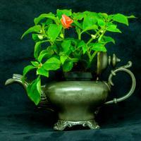 Victorian Tea Pot c.1890 (2 of 11)
