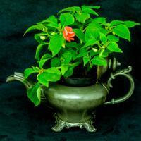 Victorian Tea Pot c.1890 (10 of 11)