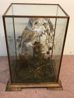 Taxidermy Barn Owl (10 of 13)