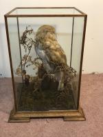 Taxidermy Barn Owl (7 of 13)