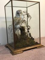 Taxidermy Barn Owl (13 of 13)