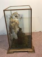 Taxidermy Barn Owl (5 of 13)