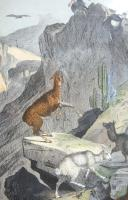 4 Framed Animal Coloured Pictures Plates c.1877 Sketches from Nature (7 of 8)