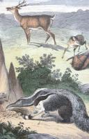 4 Framed Animal Coloured Pictures Plates c.1877 Sketches from Nature (6 of 8)