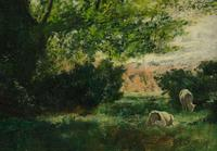 Angelsey, North Wales - Oil on Canvas - a Forest Glade (5 of 6)