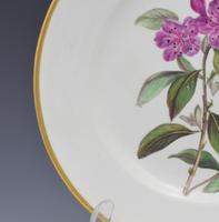 Derby Porcelain Botanical Dessert Plate Siberian Rhododendron C.1806 (5 of 7)