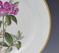 Derby Porcelain Botanical Dessert Plate Siberian Rhododendron C.1806 (4 of 7)