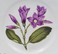 Derby Porcelain Botanical Dessert Plate Cryptostegia C.1806 (8 of 8)