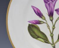 Derby Porcelain Botanical Dessert Plate Cryptostegia C.1806 (6 of 8)