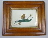 Antique Pair of Watercolours Paintings Butterflies and Pupae (3 of 9)