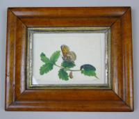 Antique Pair of Watercolours Paintings Butterflies and Pupae (2 of 9)